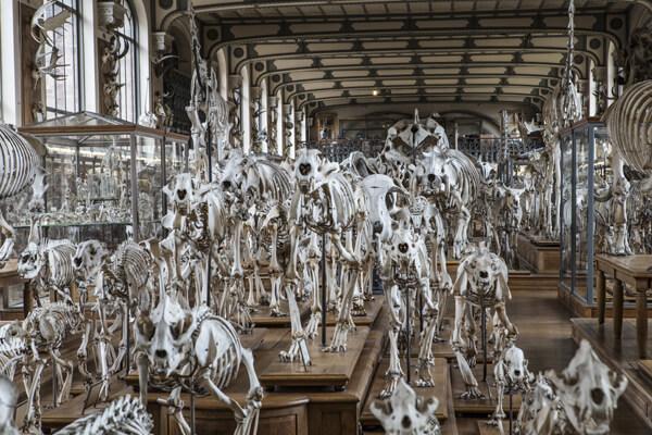 Le Muséum National  d'Histoire Naturelle de Paris partenaire officiel de l'EFOA