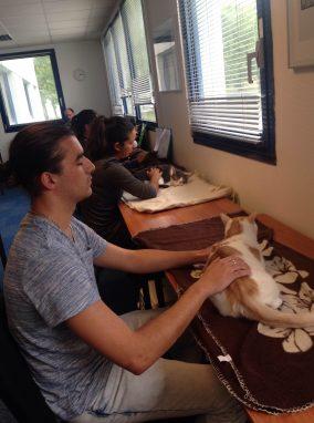 apprendre-ostéopathie-chats