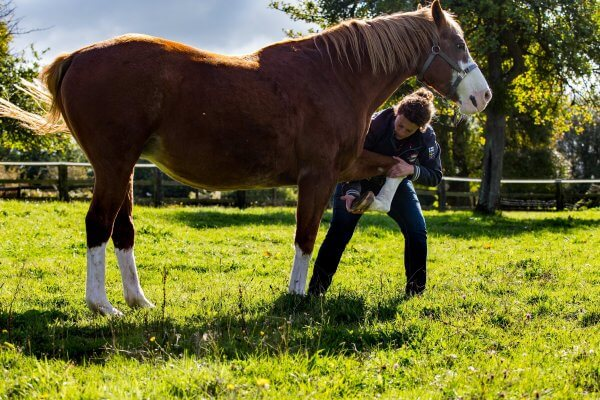 manipulation osteopathe equin