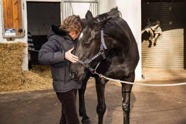 manipulation osteopathie chevaux